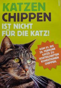 katzen chippen ist nicht f r die katz tierschutzbund. Black Bedroom Furniture Sets. Home Design Ideas