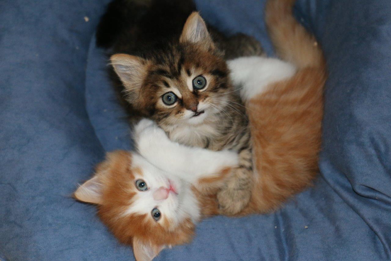 Katzen verschenken schweiz zu junge Bauernhof